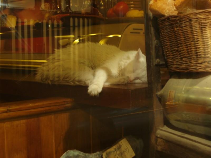 Madrid_cat