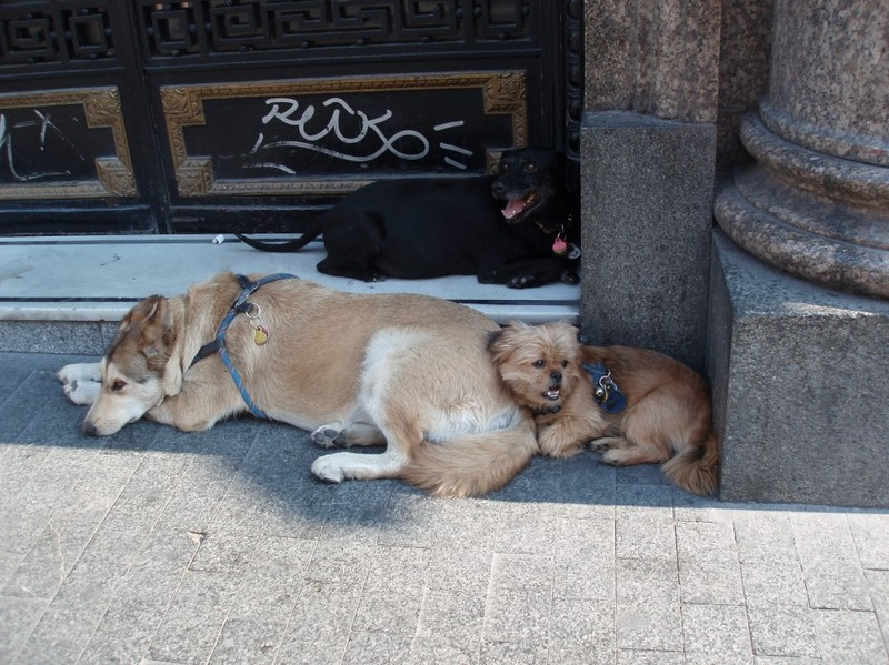 Madrid_dogs_1