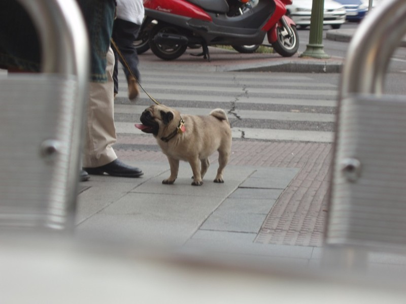 Madrid_dogs_2